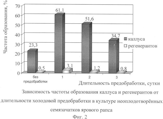 Способ создания восстановителей фертильности ярового рапса (brassica napus l.)
