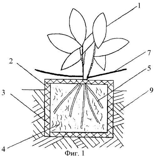 Способ сбора и посадки рассады растений и устройство для его осуществления