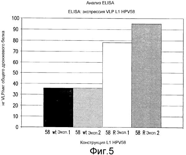 Оптимизированная экспрессия hpv 58 l1 в дрожжах