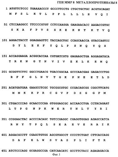 Ген mmp8opt металлопротеиназы 8