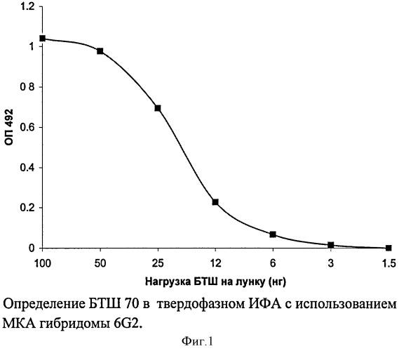 Штамм гибридных культивируемых клеток животных mus musculus 6g2 - продуцент моноклональных антител, специфичных к белку теплового шока 70