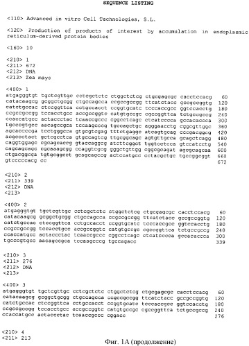 Получение пептидов и белков путем аккумулирования в эндоплазматическом ретикулуме растений