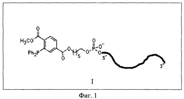 Способ нековалентной фиксации олигодезоксирибонуклеотидов на внешней поверхности живых клеток