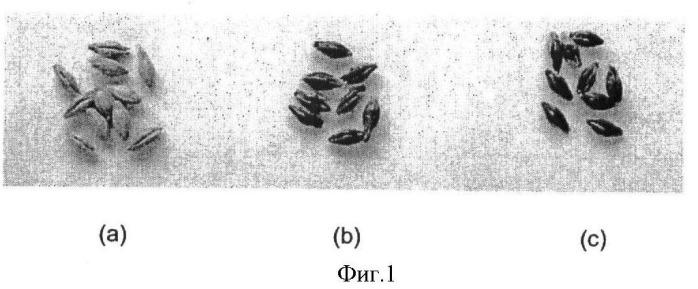 Прослеживаемость семян трансгенных растений при предварительной и последующей обработке
