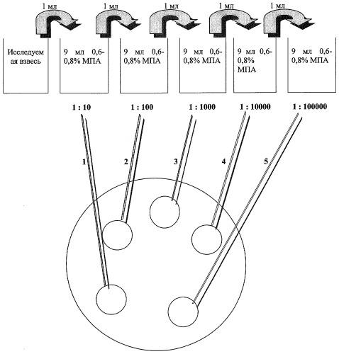 Способ определения количества мезофильных аэробных и факультативно-анаэробных микроорганизмов в пищевых продуктах