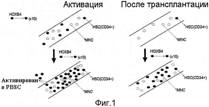 Способ получения рекомбинантного белка тат-нохв4н для использования в качестве стимулятора гемопоэза in vivo