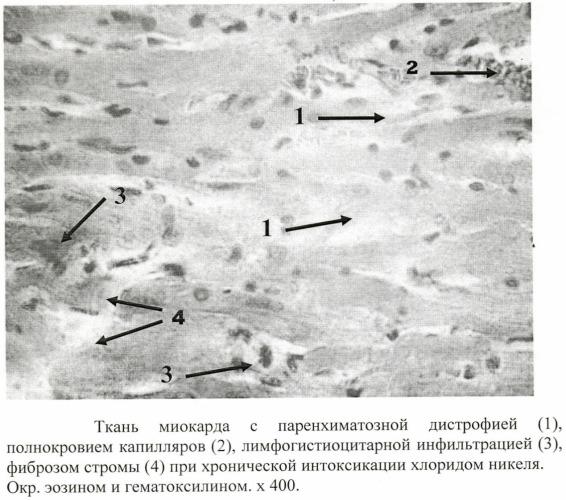 Способ моделирования хронической токсической кардиопатии