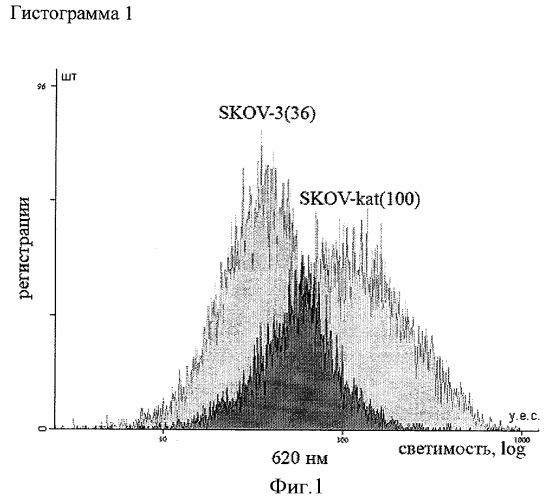 Стабильная клеточная линия аденокарциномы яичника человека skov-kat