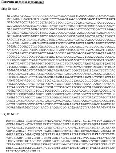 Термостабильная днк-лигаза из археи рода thermococcus, способ ее получения и нуклеотидная последовательность днк, кодирующая эту днк-лигазу