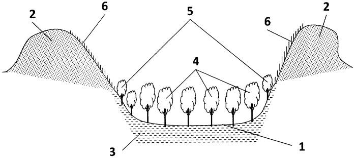 Способ лесомелиоративной рекультивации земель