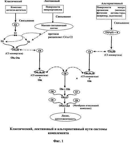 Иммуногенная композиция и способ разработки вакцины, основанной на слитом белке