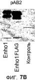 Новый пептид, участвующий в энергетическом гомеостазе