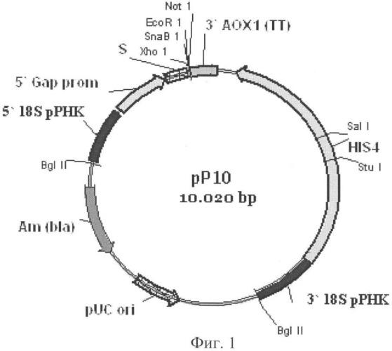Рекомбинантная плазмида для экспрессии в дрожжах pichia pastoris гена фитазы (варианты), штамм дрожжей pichia pastoris - продуцент фитазы (варианты)