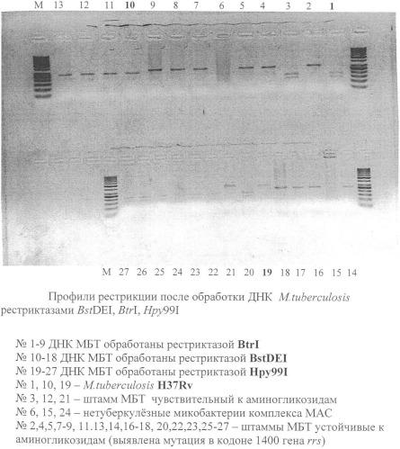 Способ диагностики чувствительности штаммов mycobacterium tuberculosis к аминогликозидам
