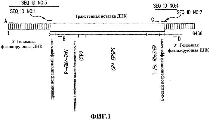 Генетическая модификация mon89788 сои и способы ее определения