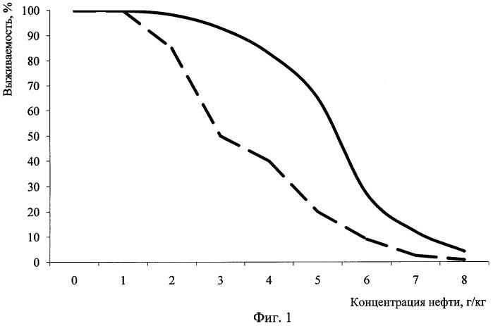 Способ получения биомассы красных дождевых червей, адаптированных к условиям нефтяного загрязнения