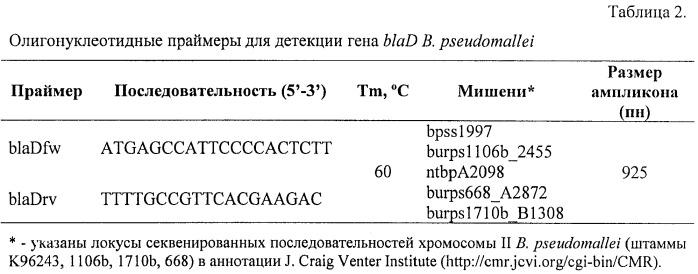 Инсерционный мутант burkholderia pseudomallei - модельный штамм для молекулярно-генетического анализа механизмов формирования множественной антибиотикорезистентности у патогенных буркхольдерий