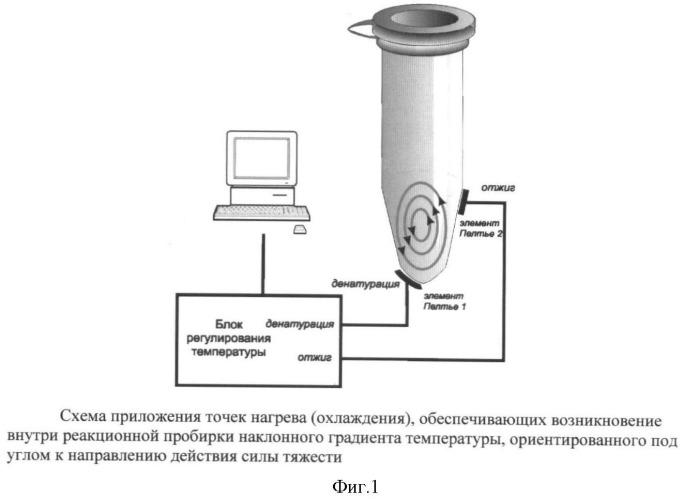 Способ проведения полимеразной цепной реакции с помощью конвекции