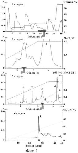Способ получения полипептида из актинии heteractis crispa, обладающего анальгетическим действием