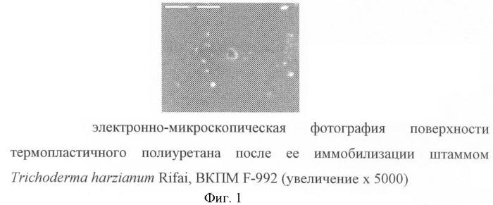 Штамм trichoderma harzianum rifai-биодеструктор термопластичного полиуретана, поливинилового спирта, латекса на основе акриловой кислоты, севилена