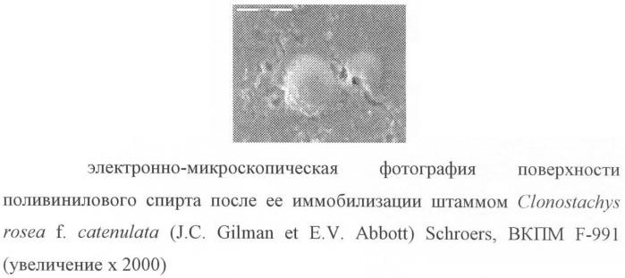 Штамм clonostachys rosea f. catenulata (j.c.gilman et e.v.abbott) schroers - биодеструктор поливинилового спирта