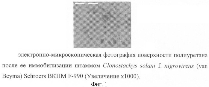 Штамм clonostachys solani f. nigrovirens (van beyma) schroers - биодеструктор термопластичного полиуретана и латекса на основе акриловой кислоты
