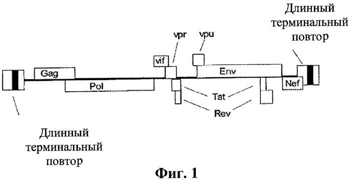 Иммуногенная композиция на основе условно живого вириона и способ ее получения