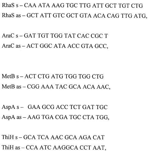Способ подвидовой дифференциации штаммов yersinia pestis методом мультилокусного сиквенс-типирования