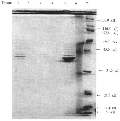 Способ получения антигена для диагностики туберкулеза крупного рогатого скота