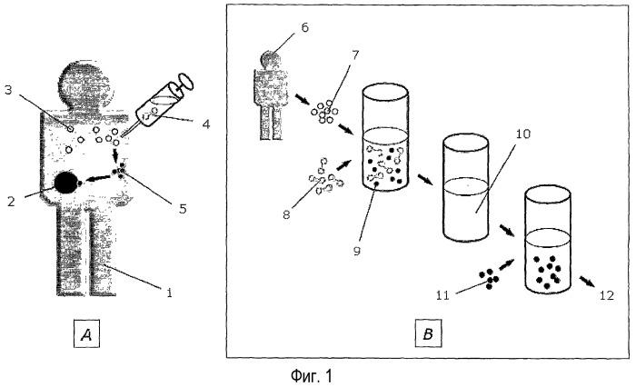 Функциональный иммуноанализ in vitro