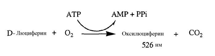 Домен связывания бактериальной атр-синтазы