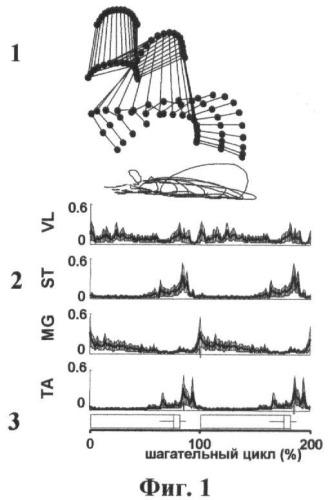 Способ моделирования и обучения лечению больных с хроническим поражением спинного мозга