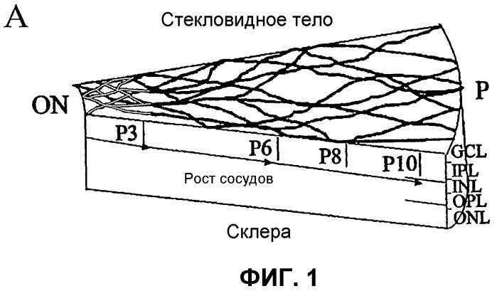 Изолированные популяции миелоидоподобных клеток костного мозга и способы лечения с ними