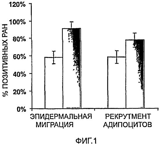 Применение адипоцитов, преадипоцитов и стволовых клеток для индукции или ускорения заживления раны и фармацевтическая композиция, содержащая их