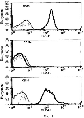 Вакцина на основе в-клеток, нагруженных лигандом т-клеток-природных киллеров и антигеном
