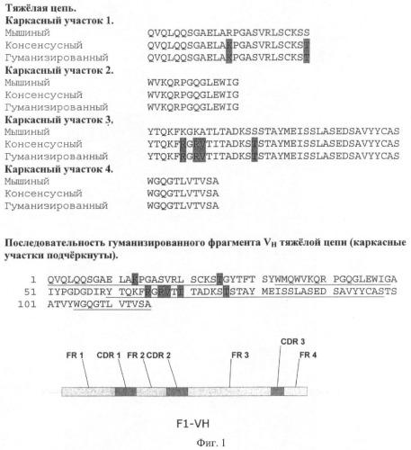 Гуманизированные антитела и fab, связывающиеся с антигеном f1 из yersinia pestis, и способ их получения с использованием дрожжей
