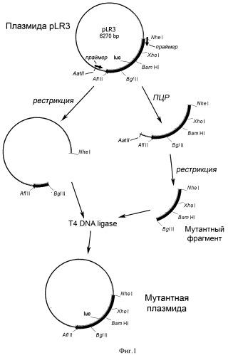 Реагент для определения аденозин-5'-трифосфата