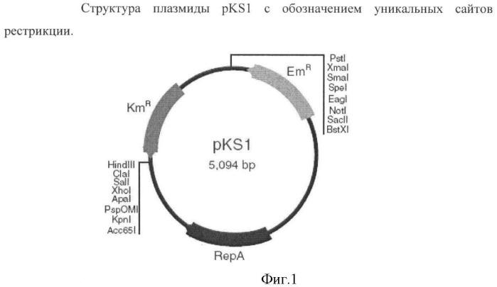 Способ получения пуриновых рибонуклеозидов и рибонуклеотидов