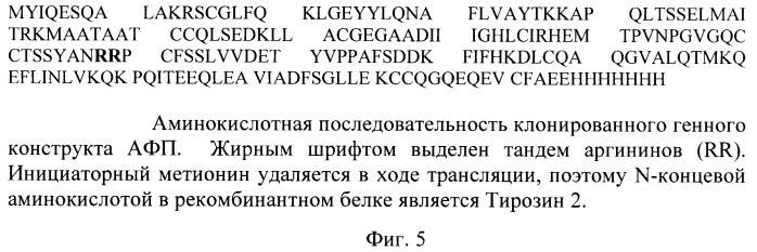 Штамм escherichia coli bl21(de3)/pafp11d3 - продуцент фрагмента с 404 по 609 аминокислоту альфа-фетопротеина человека