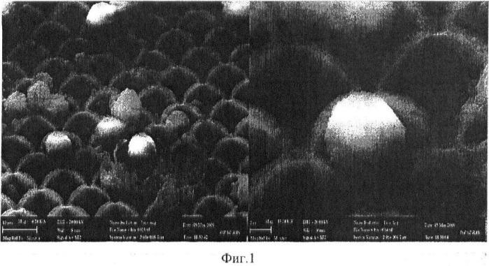 Способ селективного выделения популяции жизнеспособных клеток из биологических жидкостей