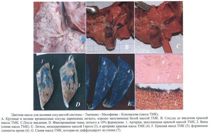 Способ приготовления цветной массы для наливки сосудистой системы при анатомических исследованиях