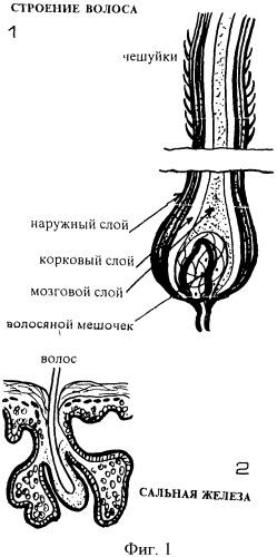 Способ стрижки волос грибанова