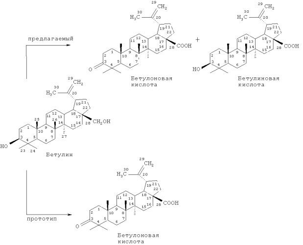 Способ получения бетулиновой кислоты