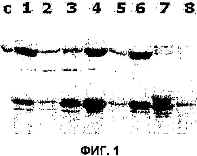 Способ массового производства области fc иммуноглобулина с удаленными начальными метиониновыми остатками