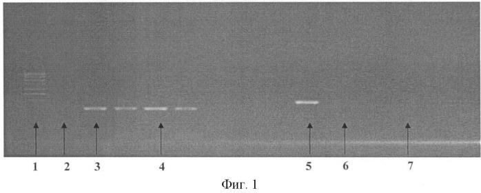 Реассортантный штамм вируса гриппа rn 1/09-swine a(h7n1) для определения антител к нейраминидазе при гриппозной инфекции и вакцинации