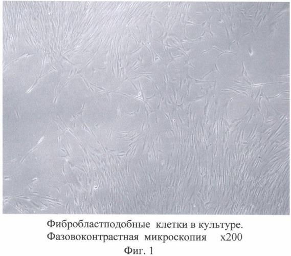 Биотрансплантат для коррекции дефектов мягких тканей (варианты), способ получения биотрансплантата (варианты) и способ коррекции дефектов мягких тканей