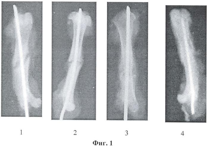 Способ стимуляции репаративного остеогенеза