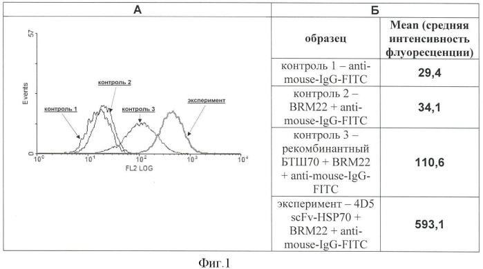 Способ стимуляции противоопухолевой активности цитотоксических эффекторов иммунной системы