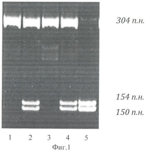 Способ прогнозирования риска развития гестоза на основе генетических маркеров