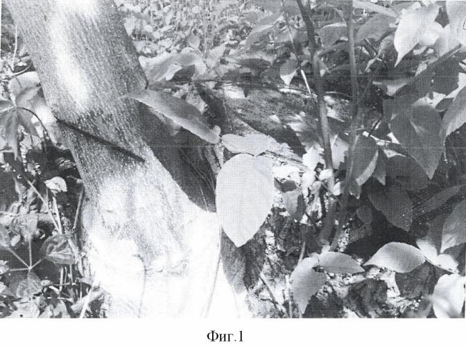 Способ семенной посадки и дальнейшего выращивания многолетних, преимущественно древесных, растений